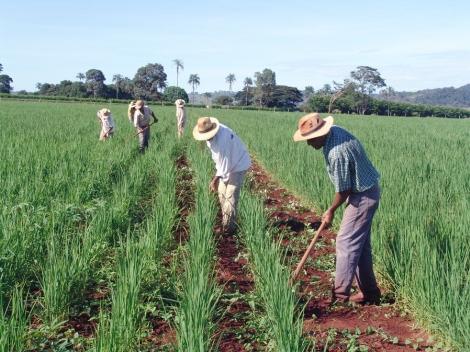 O seguro, no valor de R$850, é disponibilizado ao agricultor familiar em cinco parcelas de R$170