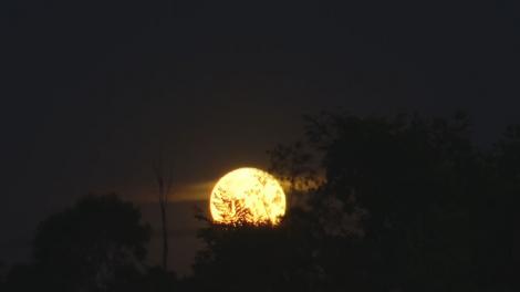 Fenômeno acontece quando a lua atinge o seu ponto mais alto, o perigeu, e aparenta estar 14% maior e até 30% mais brilhante no céu